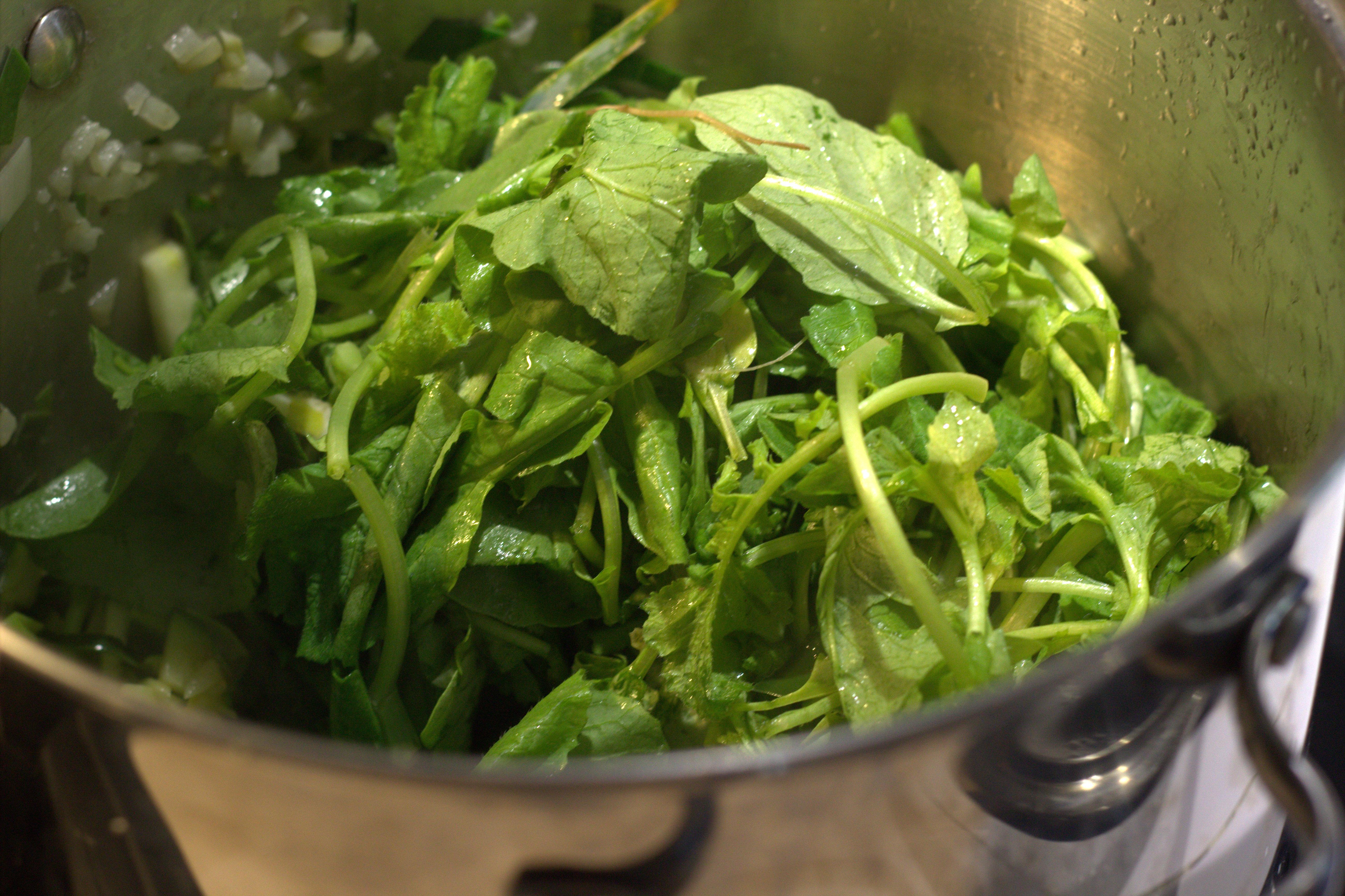 Cuisiner les fanes de radis comment cuisiner les fanes - Comment cuisiner des navets nouveaux ...